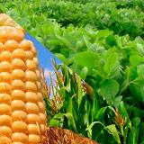 BIO TAK B - Promotor de crecimiento de cultivos