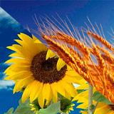 BIO TAK P - Promotor de crecimiento de cultivos
