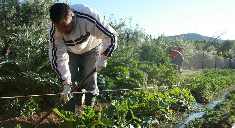 desarrollo-rural-campo-obrero-cachara-trabajador